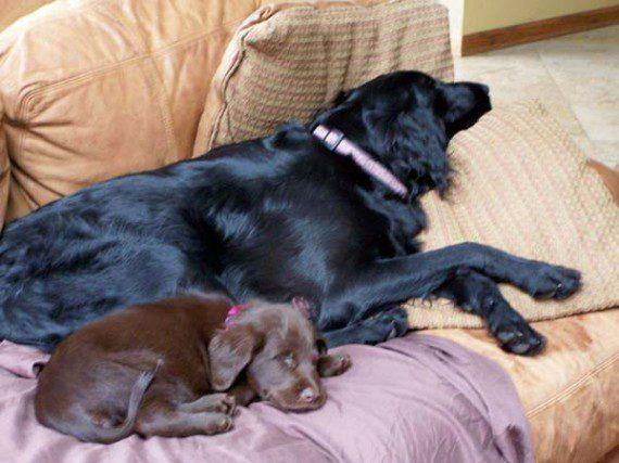 blind-dog-gets-new-friend-3