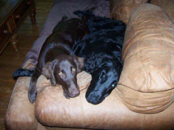 blind-dog-gets-new-friend-5