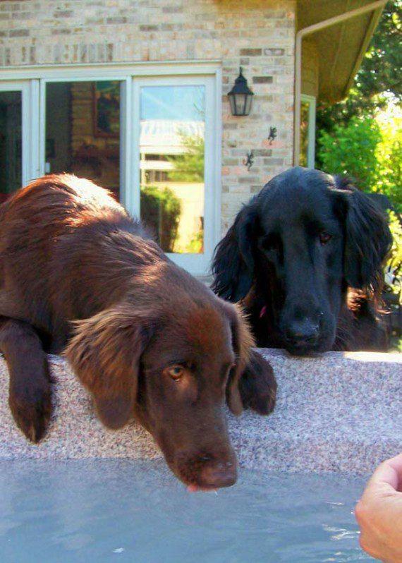 blind-dog-gets-new-friend-6