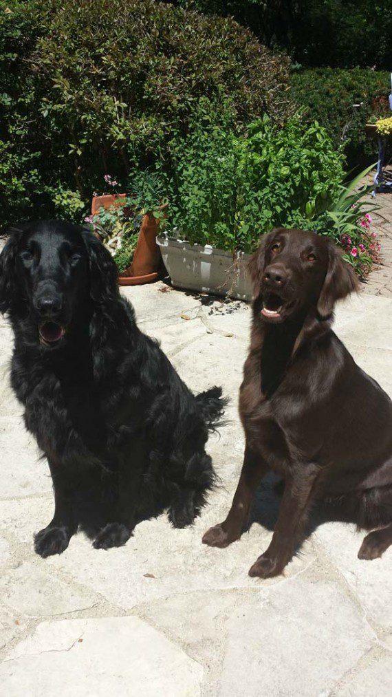blind-dog-gets-new-friend-8