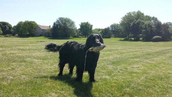 blind-dog-gets-new-friend-9
