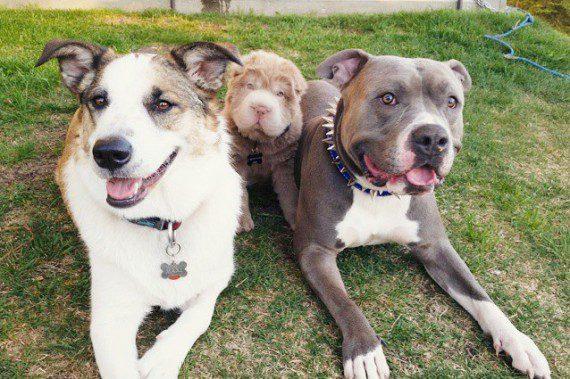 breed17-570x379