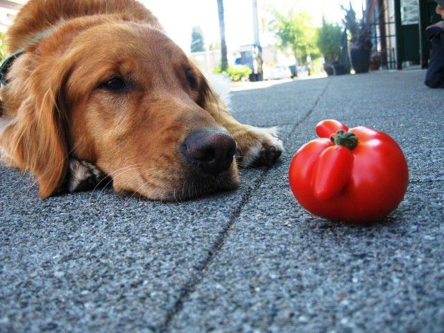 dangerous-foods-tomato