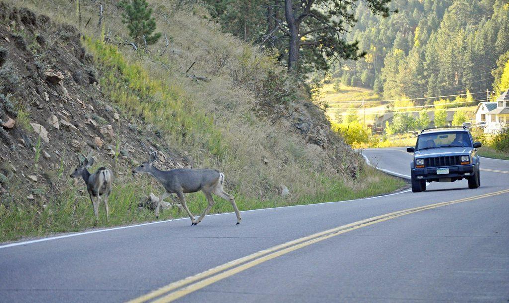 deer-accident-3