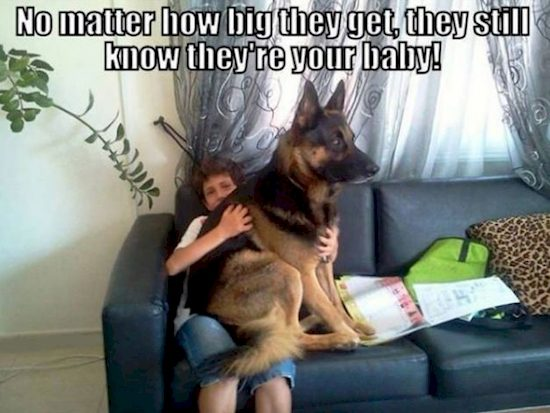 dog-owners-only-understand-13