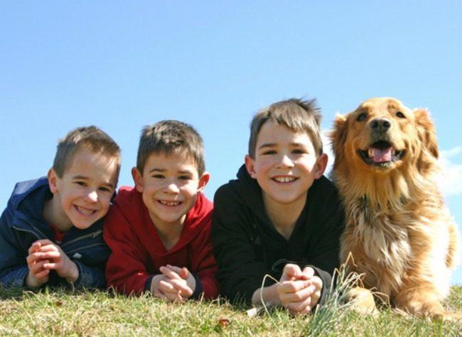 dogs-vs-siblings-1
