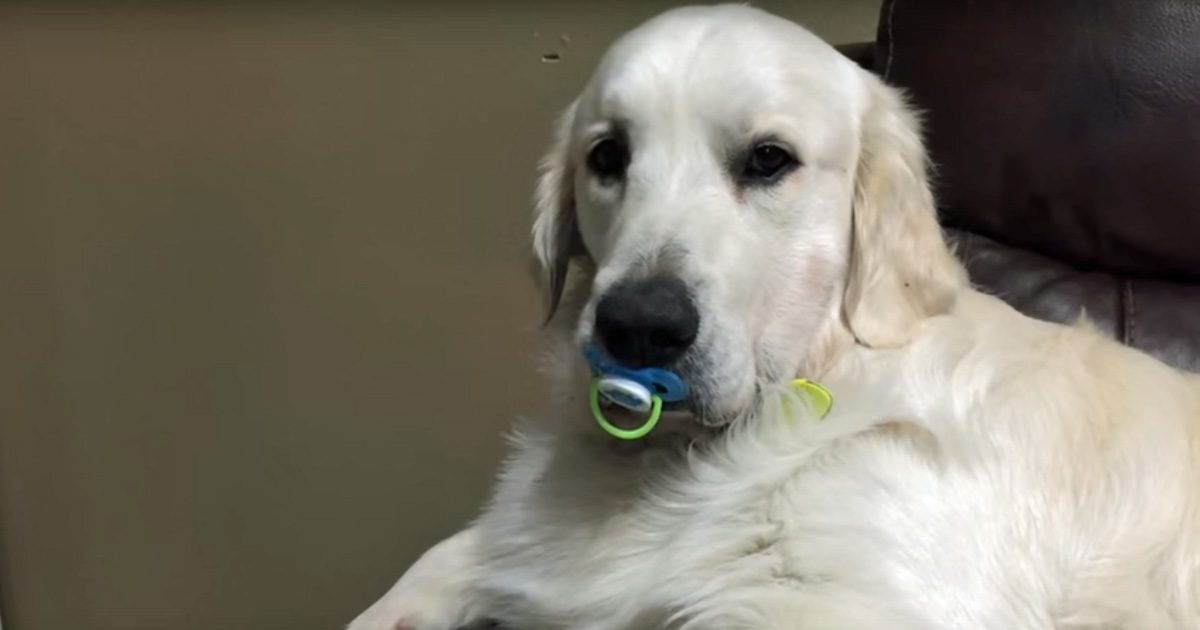 dogwithpacifier