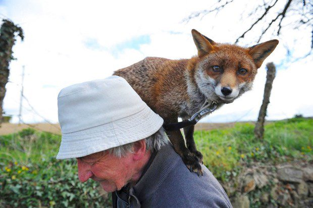 foxy-family-2