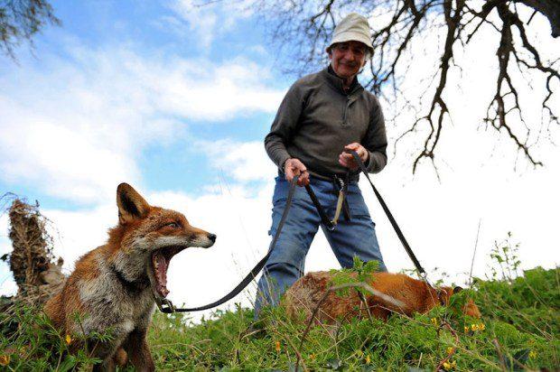 foxy-family-8