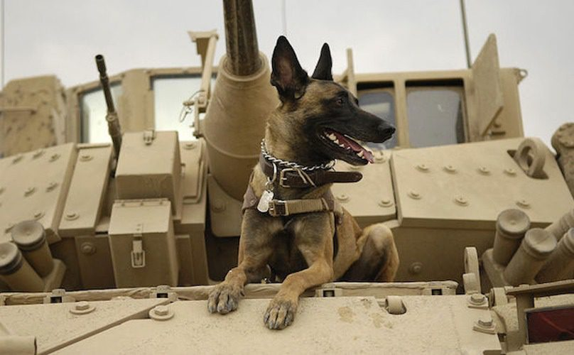military-dog-feature