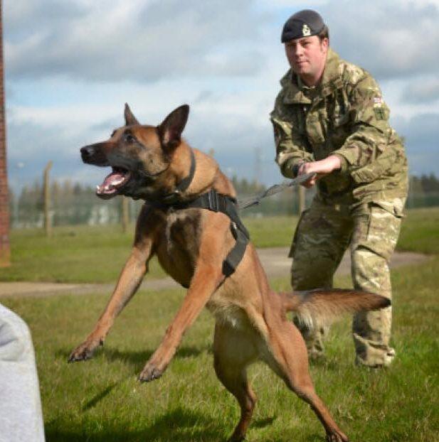 military-working-dog-5-e1463084072790