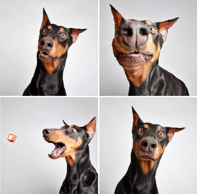 shelter-dogs-photo-booth_0