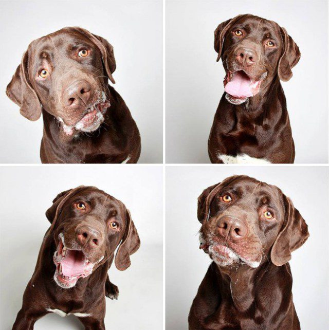 shelter-dogs-photo-booth_10