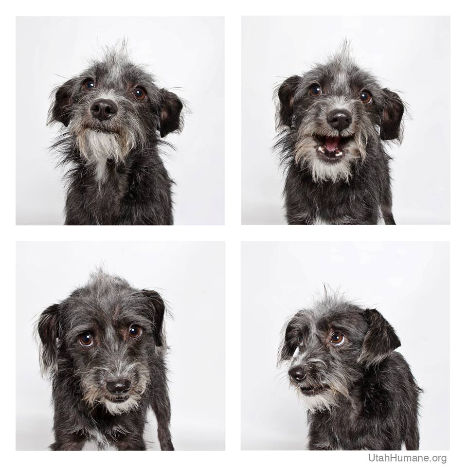 shelter-dogs-photo-booth_17
