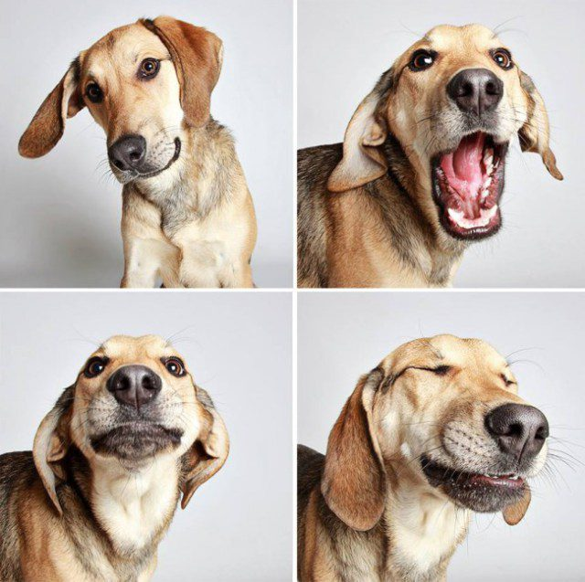 shelter-dogs-photo-booth_6