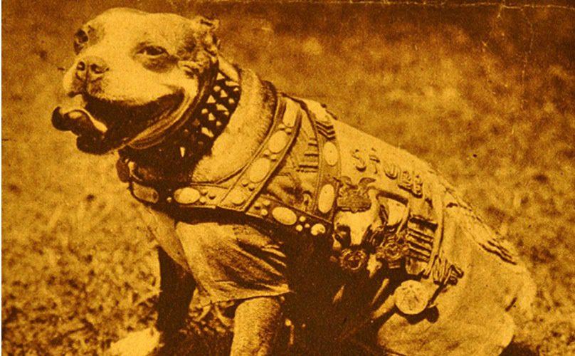 stubby-dog-feat