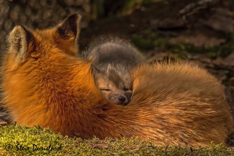 Baby-Fox7