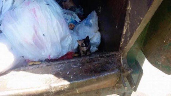 cat-in-trash-1
