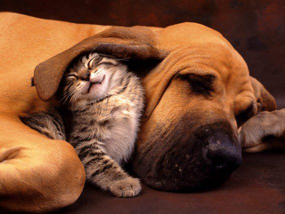cats-and-dogs-best-friends-1