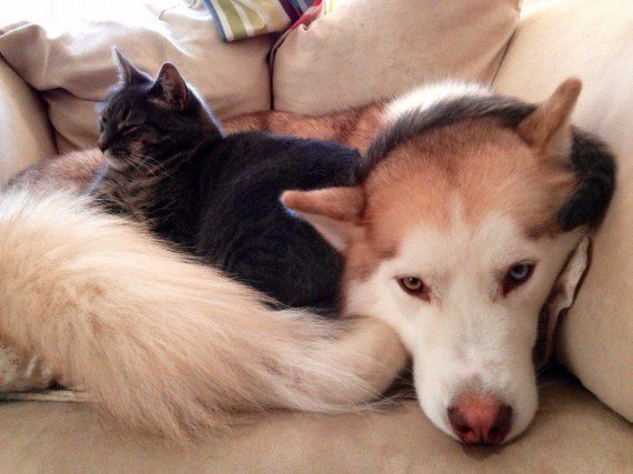 cats-sleeping-on-dogs-12