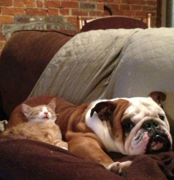 cats-sleeping-on-dogs-4
