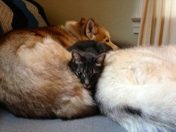 cats-sleeping-on-dogs-5