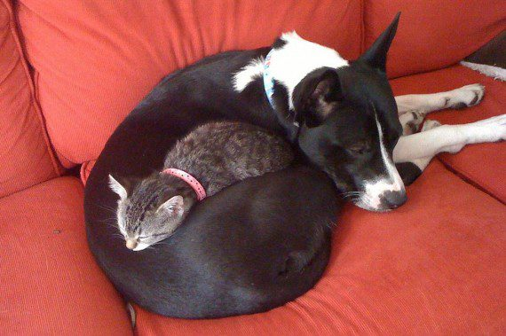 cats-sleeping-on-dogs-6