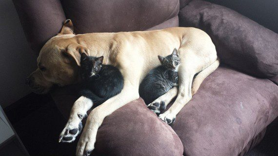 cats-sleeping-on-dogs-8