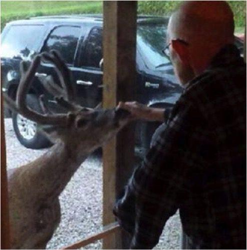 deer-visits-dying-man-2