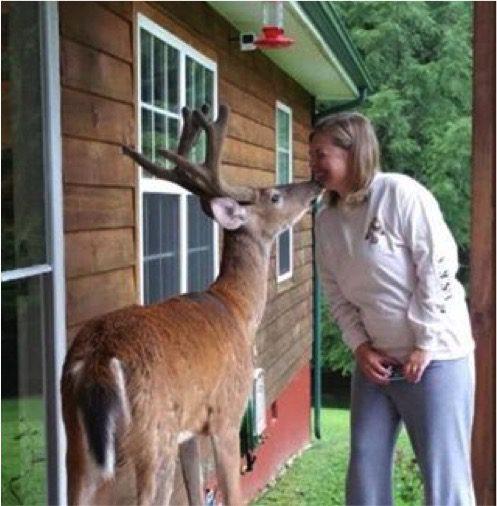 deer-visits-dying-man-3