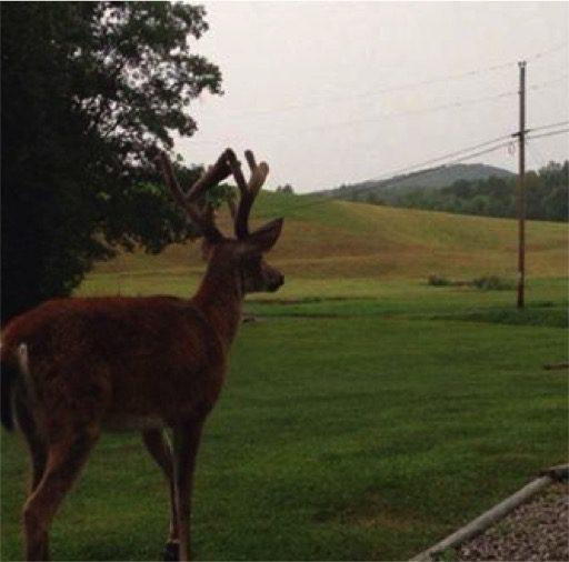 deer-visits-dying-man-4