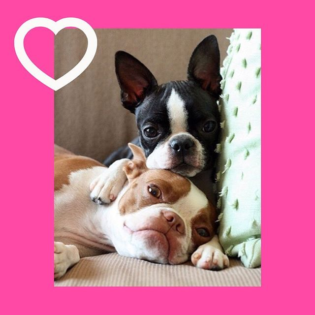 dog-couples-15