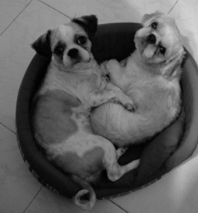 dogcouplesketchy1-1 (1)
