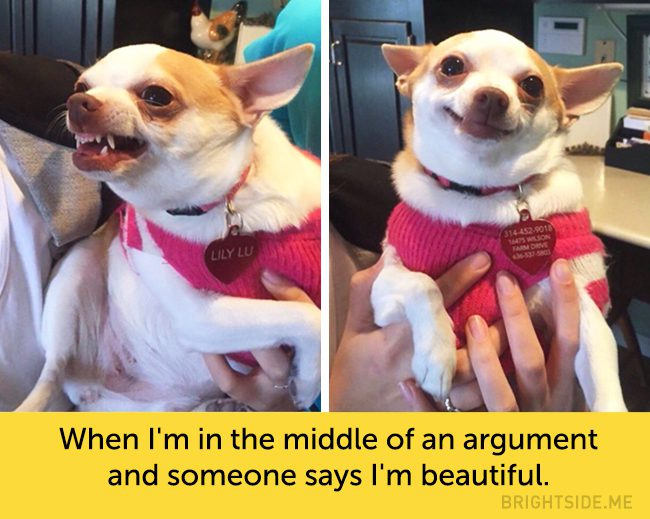 dogs-hilarious-facial-expressions1