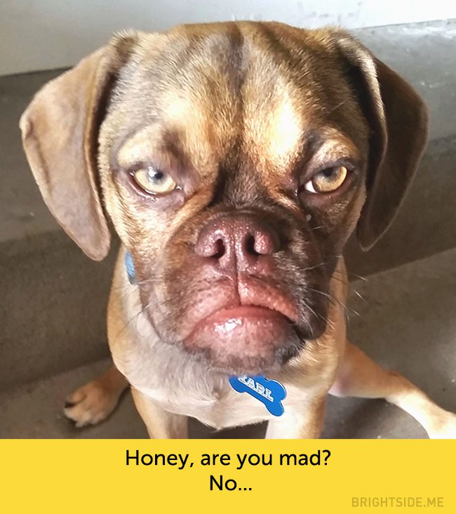 dogs-hilarious-facial-expressions12