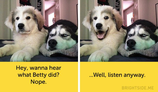 dogs-hilarious-facial-expressions15
