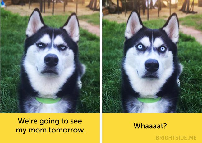 dogs-hilarious-facial-expressions3