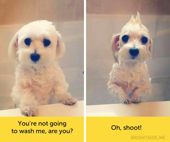 dogs-hilarious-facial-expressions4