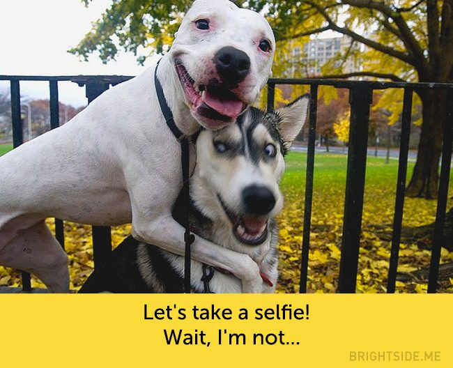 dogs-hilarious-facial-expressions5