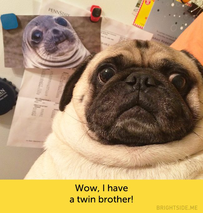 dogs-hilarious-facial-expressions6