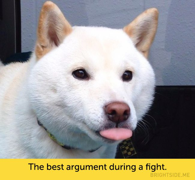 dogs-hilarious-facial-expressions7