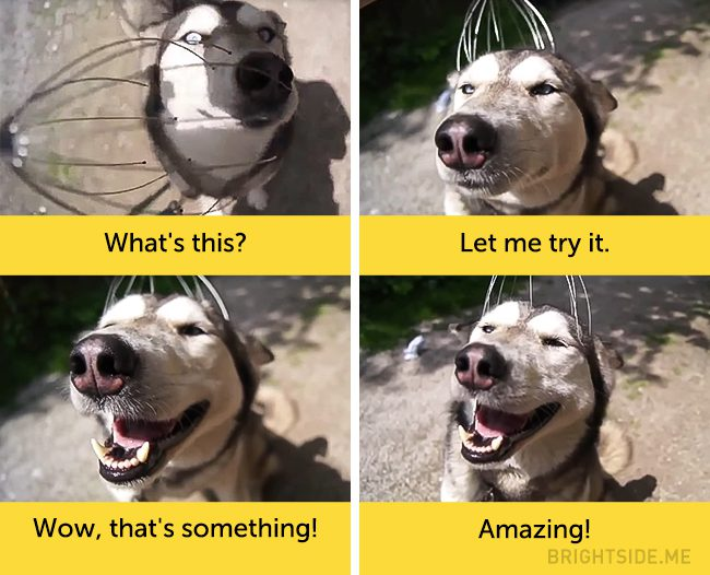 dogs-hilarious-facial-expressions8