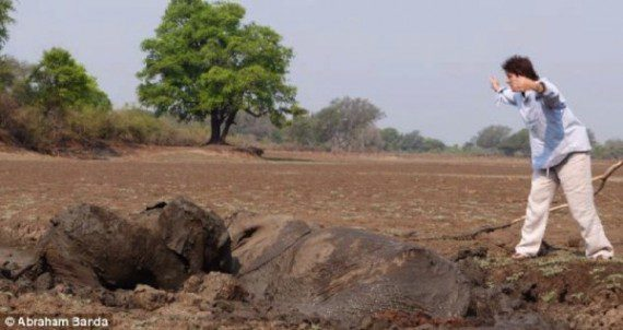 elephants-stuck-in-mud-7