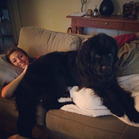giant-dogs-2