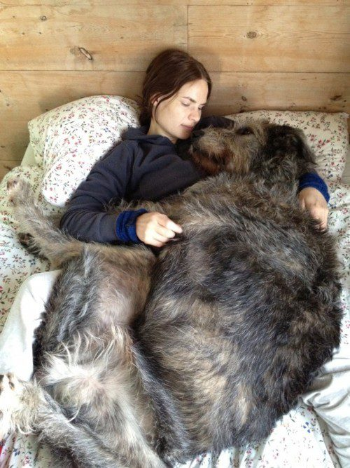 giant-dogs-4
