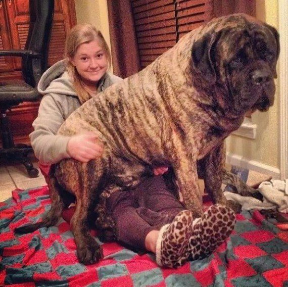 giant-dogs-9