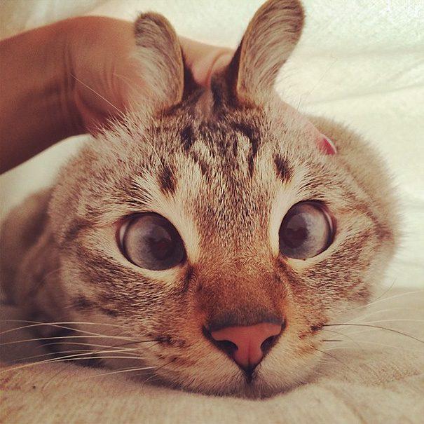 googly-eyed-cats-11