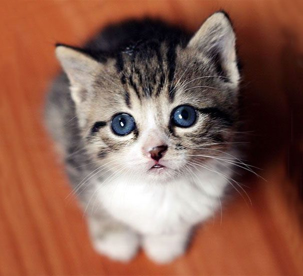googly-eyed-cats-12