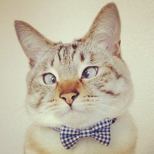 googly-eyed-cats-14