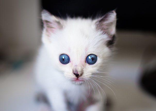 googly-eyed-cats-17
